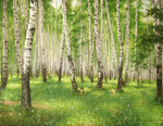 Alecksandrow Vladimir - 'Birch Grove'