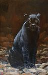 Baranov Pavel  - 'Panther'