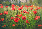 Busygin Valeriy - 'Poppies'