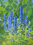 Ievlev Boris - 'Blue Delphiniums'